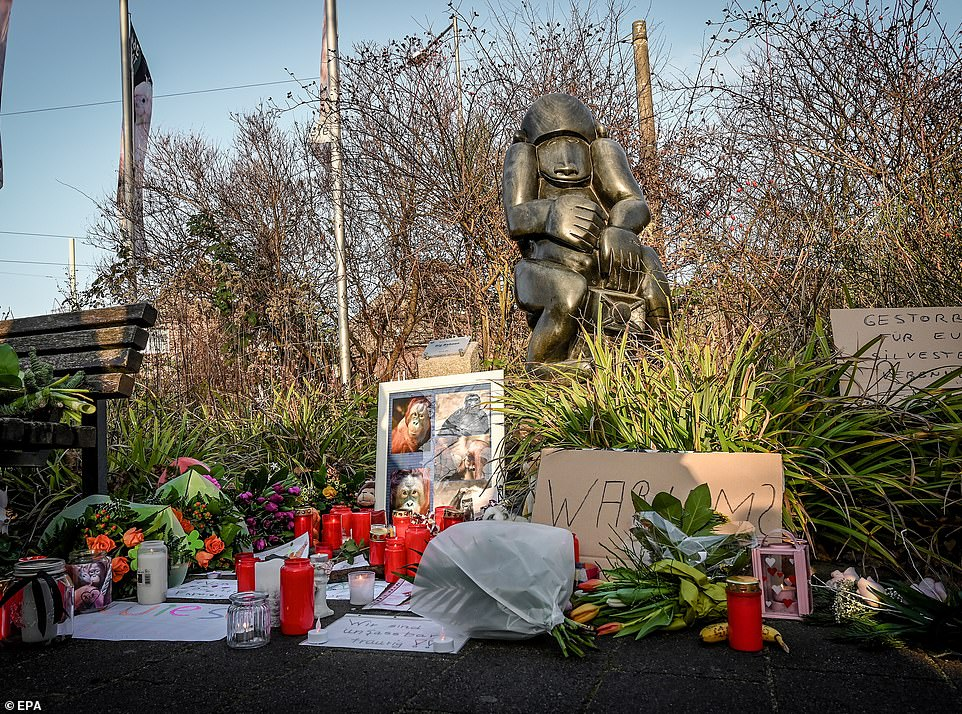 22878992-7842463-A_makeshift_shrine_was_set_up_at_the_entrance_outside_of_the_zoo-a-2_1577909531116