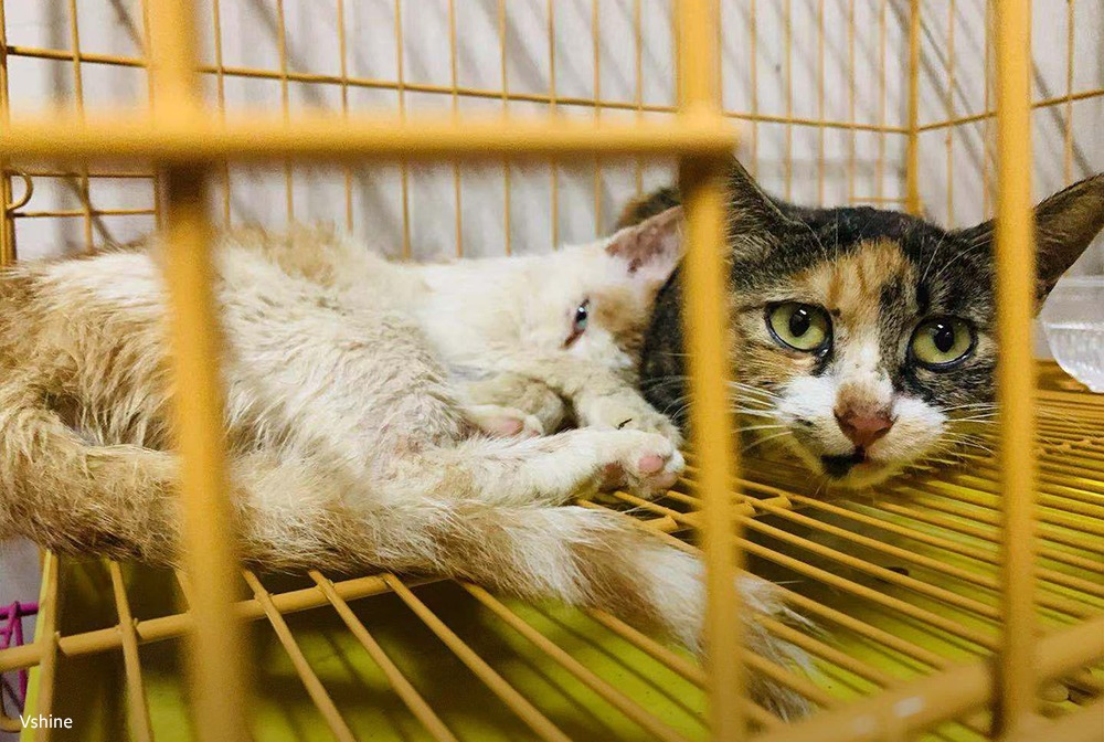 china-cat-rescue