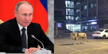 Putin Lion Lockdown