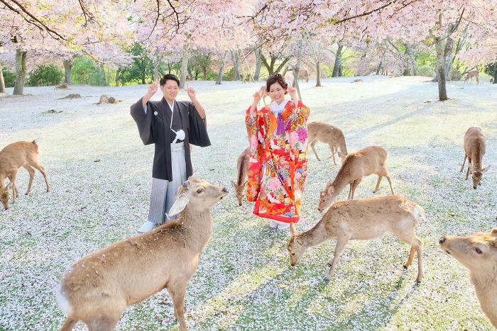 deer-cherry-blossom-nara-park-japan-5ec2412dba21a__700