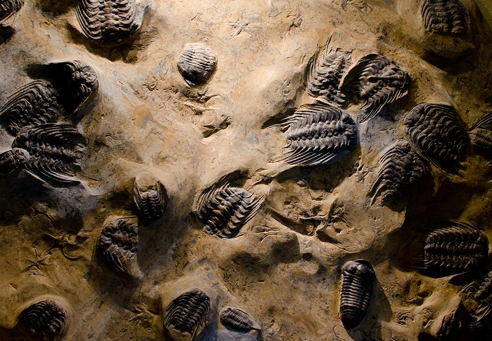 trilobites_small1