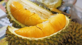 cara-pilih-durian-sedap-copy