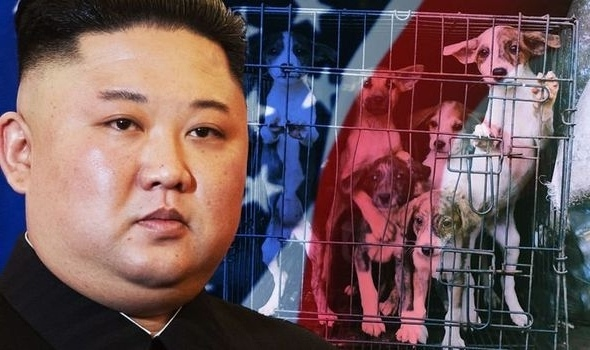 north-korea-horror-dog-admission-amid-pet-for-food-claim-in-kim-jong-un-s-state-1505009
