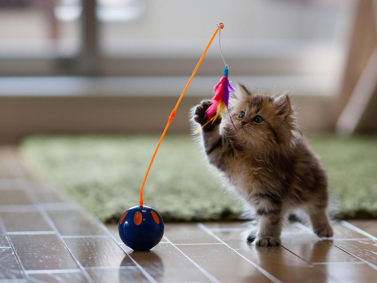 Cute-Kitten-Playing-with-Toy-HD-Cat-Wallpaper_NatureWallBase.Blogspot.Com