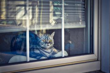 cat-4021547_1920