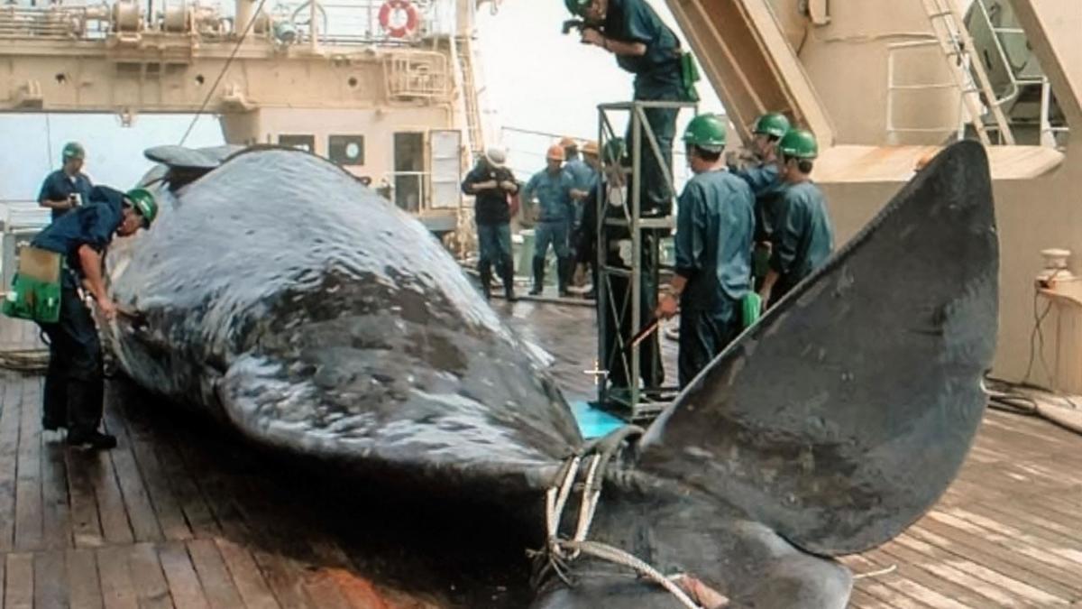 sn-whaling