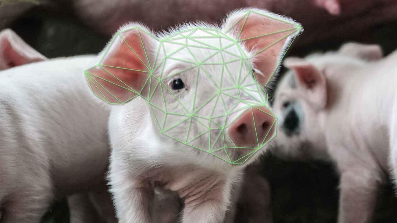 vegan-plant-based-news-pig-livekindly