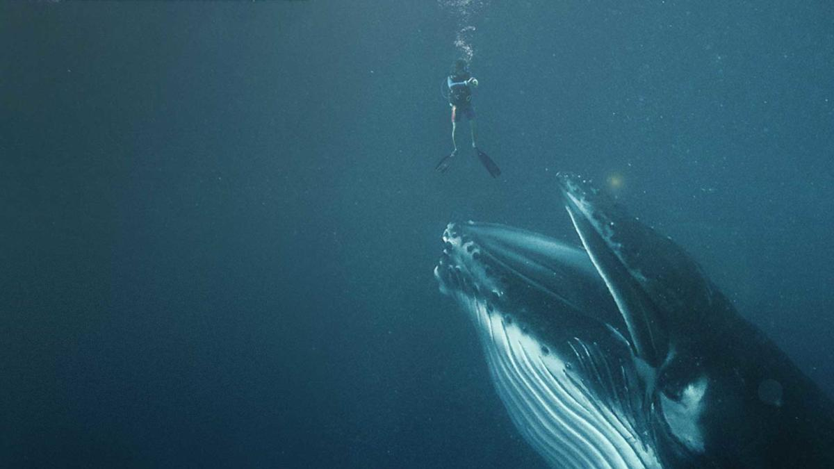 Swallowed-by-a-whale-2