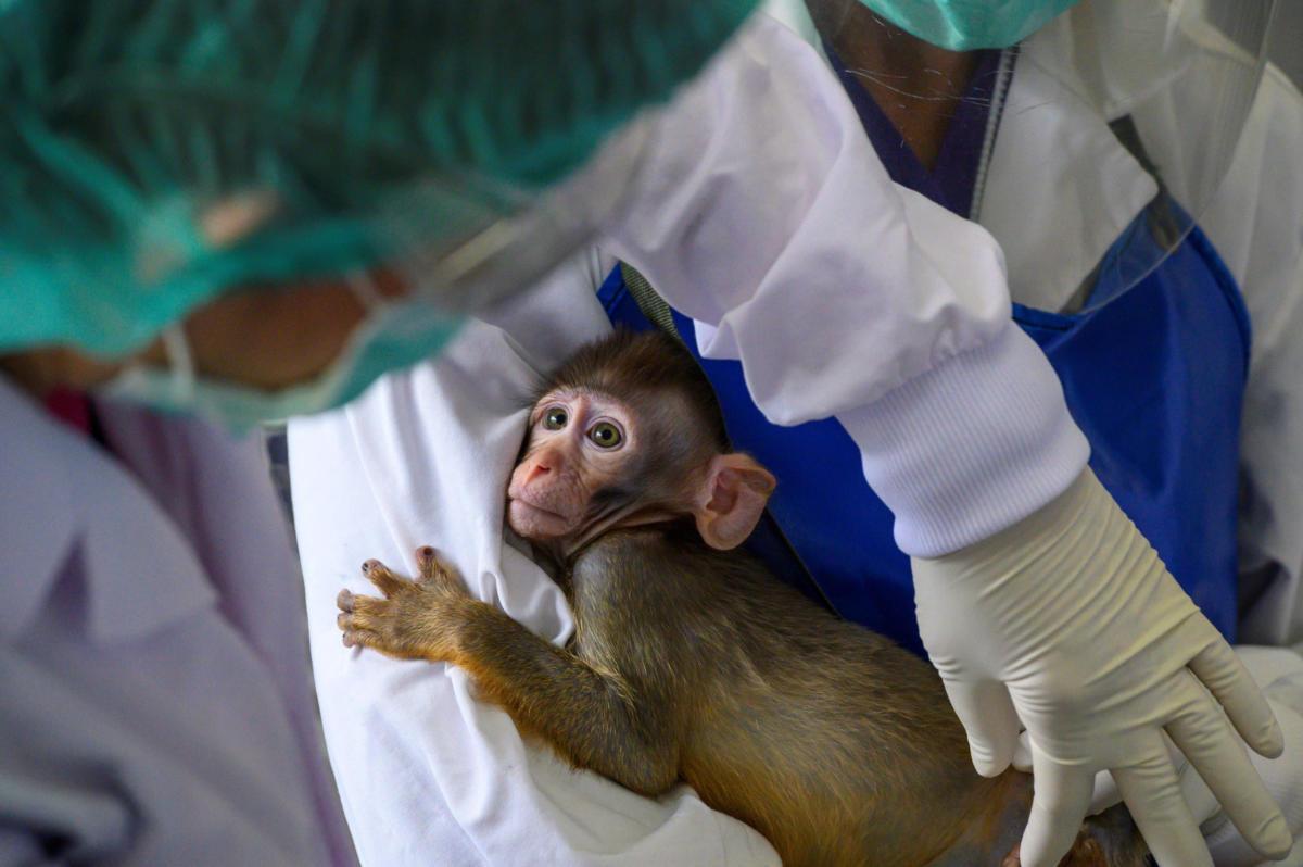 baby-lab-monkey