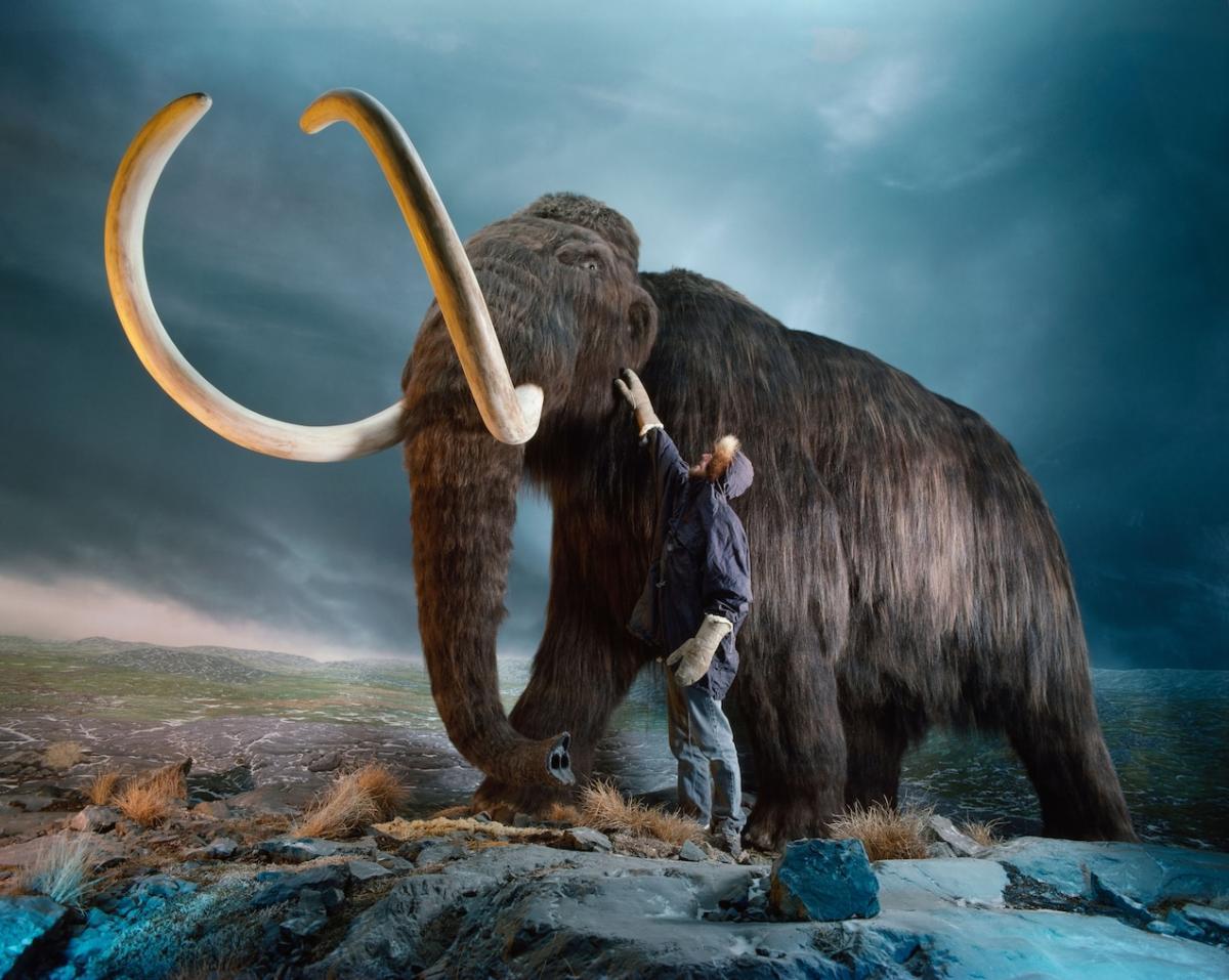 Saintis jalankan kajian untuk hidupkan kembali 'Mammoth' yang pupus 4000 tahun lalu